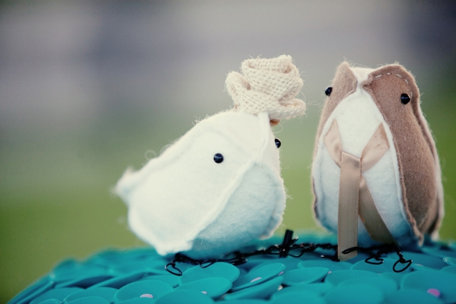 brown and white birds